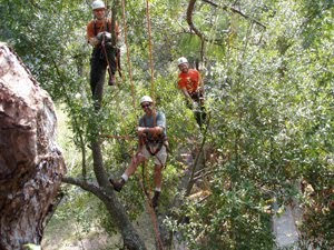Group tree climbing is best with friends ~ photo by Chris O'Bryan