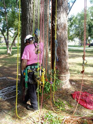 Did somebody say ropes?  A good climber should have several ropes to access the tree canopy safely. ~ photo by Chris O'Bryan