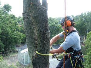 Safety is the number one priority for any professional arborist. ~ photo by Chris O'Bryan